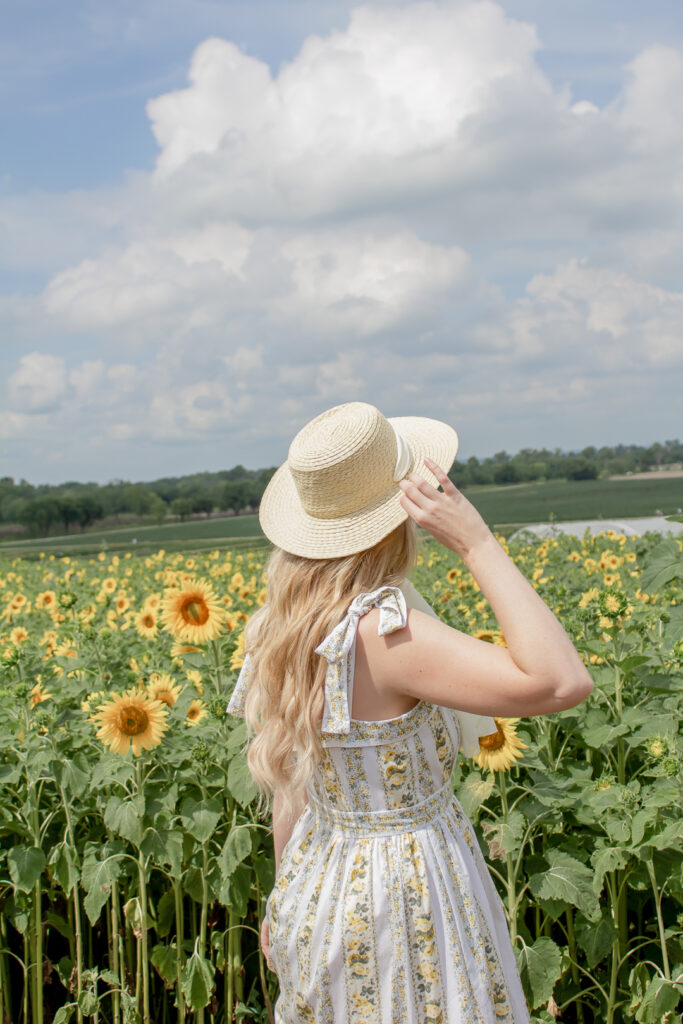 Sunflower Fields 13