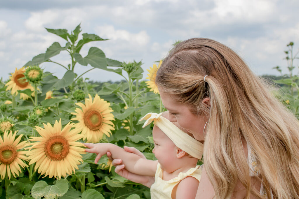Sunflower Fields 3